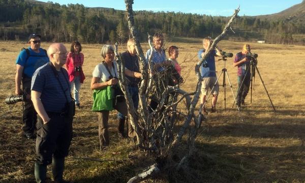 Deltagerne på leting etter spillende dobbeltbekkasiner i utkanten av myra