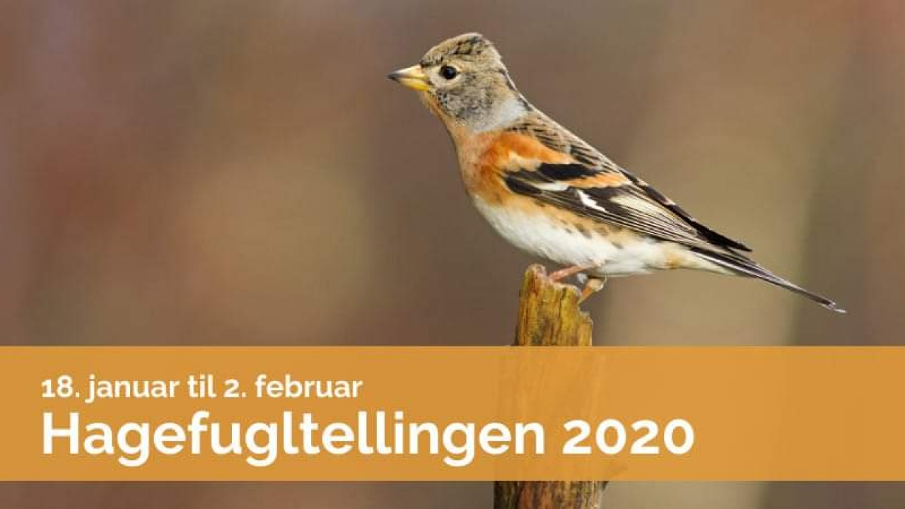 Bli med på Hagefugltellingen 2020. Foto: Frode Falkenberg